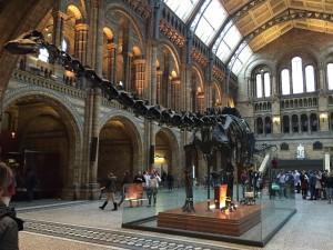 恐竜の化石はこども心をくすぐります。